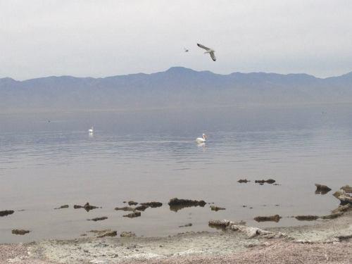 The Salton Sea Today